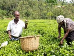 KTDA latest news for tea farmers.